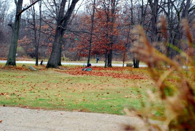 wind in the oaks