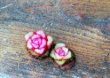 beet roses 3