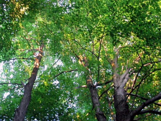 trees in Kimberley
