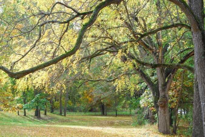 fall walnuts