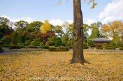 At Nijo Castle in autumn, Kyoto