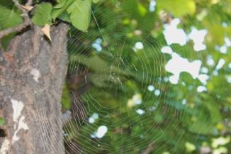 spider-web-1021983_1920