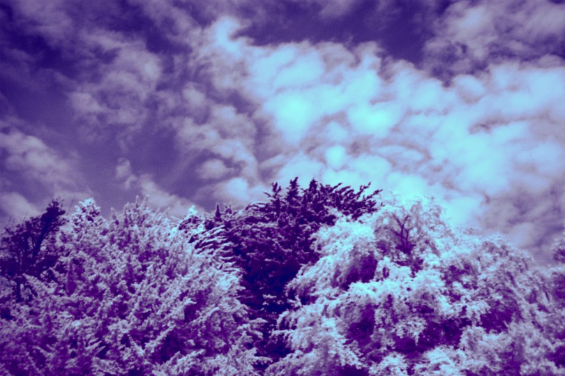 IR Trees - Whitby
