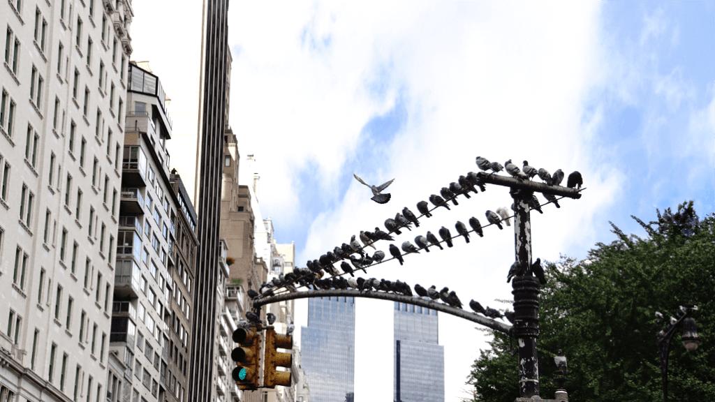 A bird takes flight near Central Park