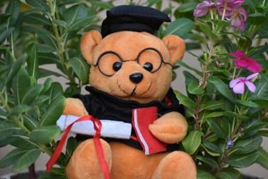graduate bear