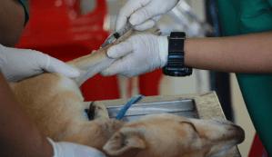 treating a dog