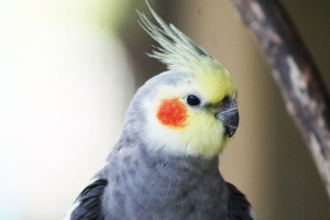 Read more about the article Exotic Pet Care Resources
