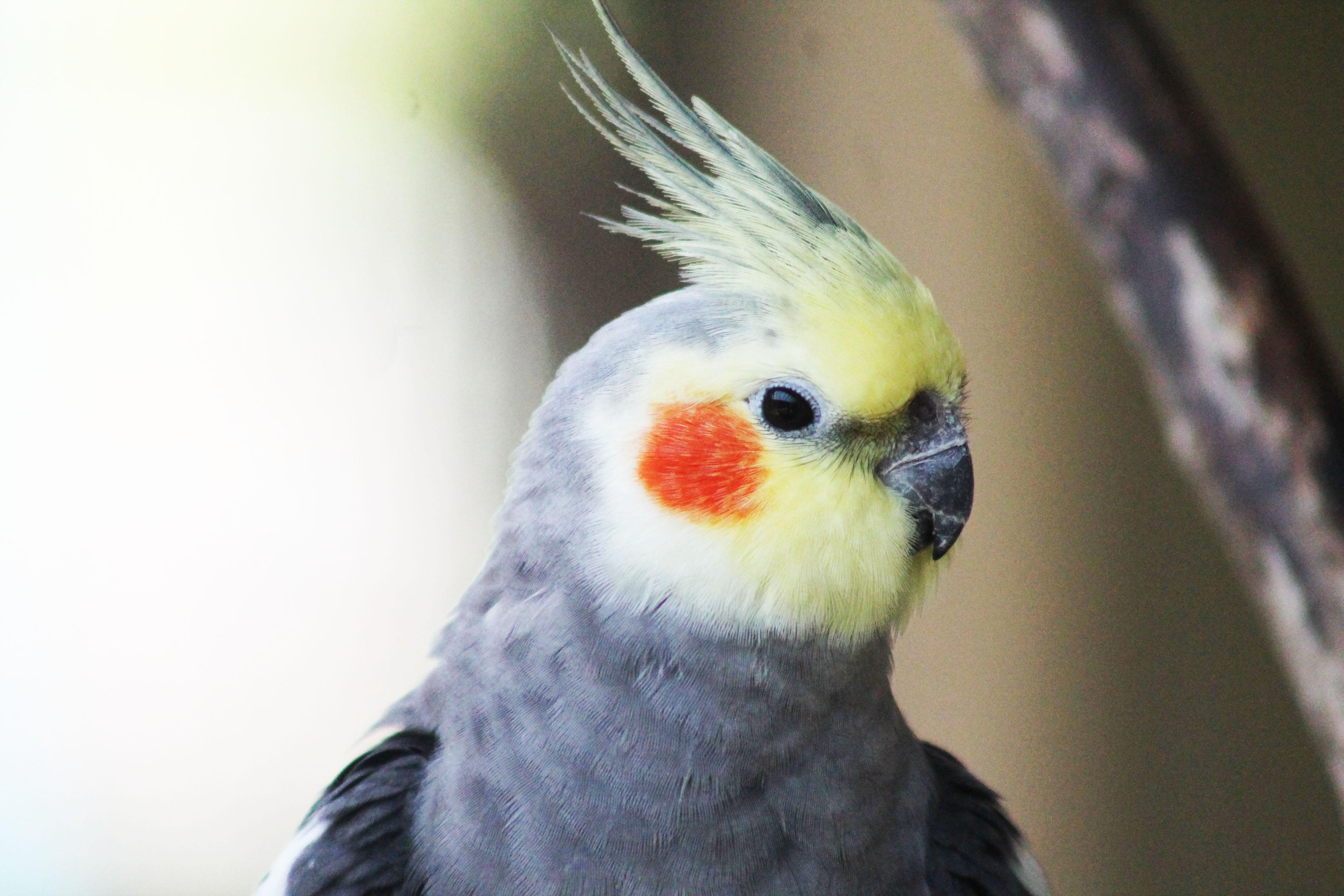Wellness Exams for Birds