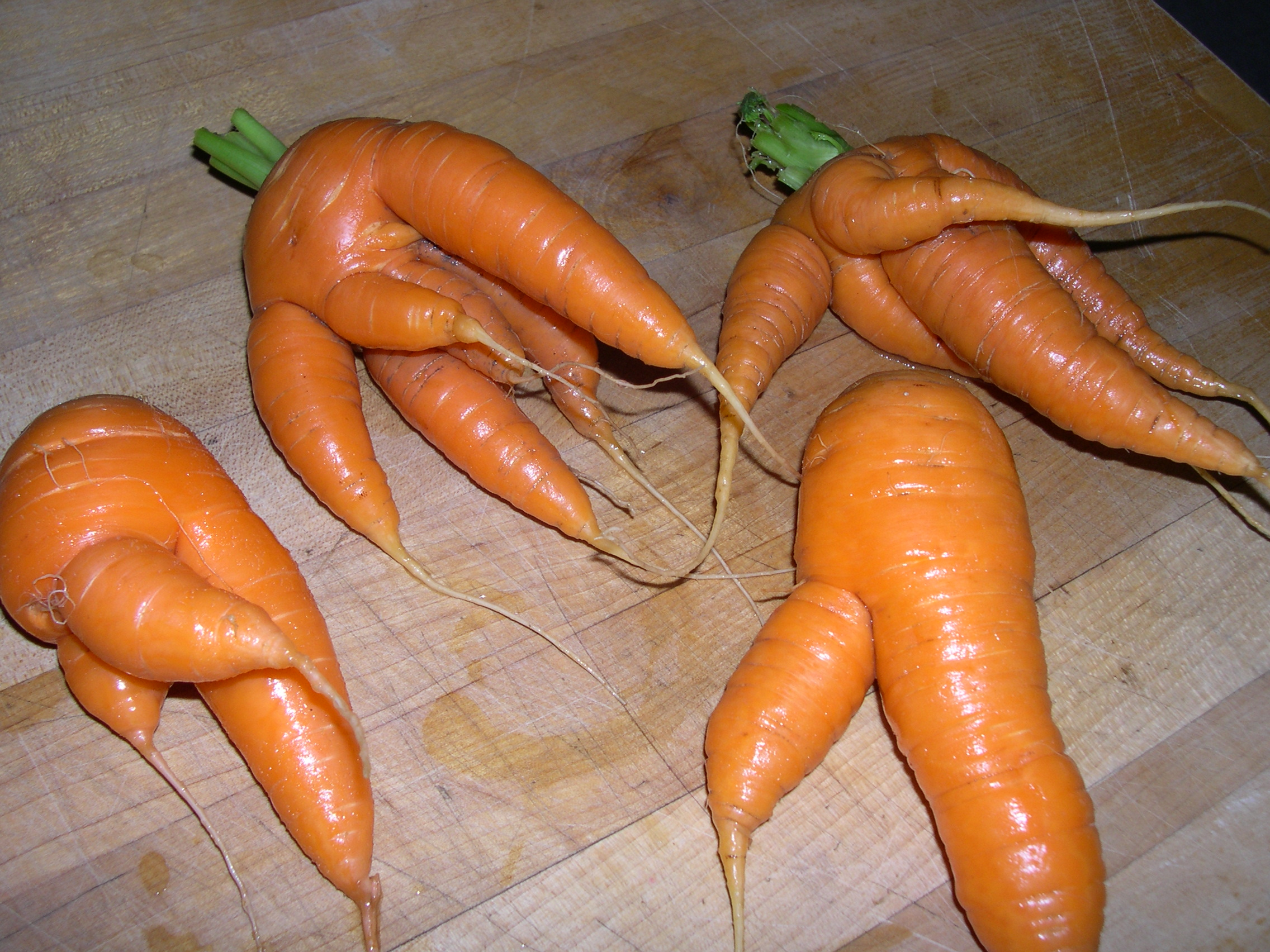 ... mutations. Here portrayed, wildly inaccurately, as mutant carrots