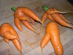 MTHFR gene mutations. Here portrayed, wildly inaccurately, as mutant carrots.