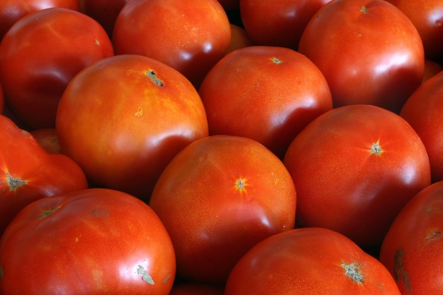 The uniformity of grocery store tomatoes. Try foraging! © Jamie Wilson | Dreamstime Stock Photos
