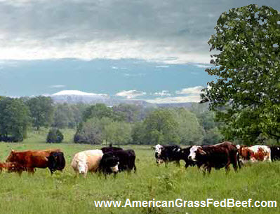 This is the life of honest to god grass fed beef from americangrassfedbeef.com. Now don't these look like happy cows?