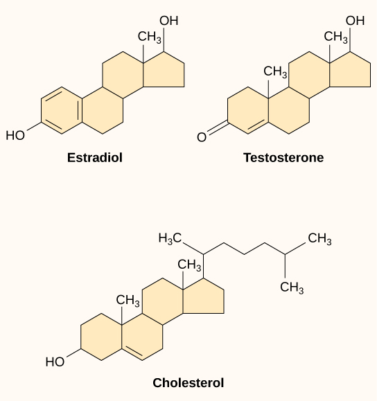 Estrogen and testosterone (progesterone as well, but it's not pictured) are incredibly similar to cholesterol, which is why gallbladder sludge in pregnancy is such an issue.