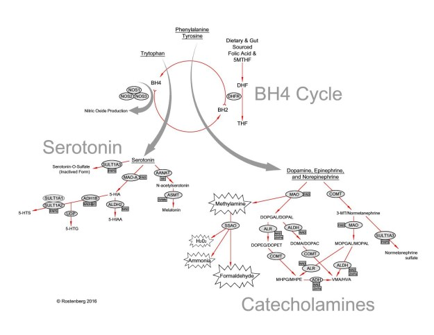 This is the link between MTHFR and depression, in not so plain english. Great diagram from Dr. Rostenberg, in this post which goes into the subject in more detail. Dr. R was kind enough to give me permission to use this! http://www.beyondmthfr.com/mthfr-depression-folate-bh4-connection/