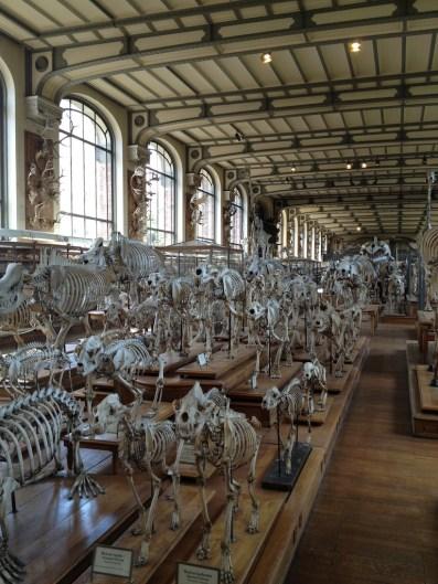 Galeries de Paléonotologie et d'Anatomie comparée