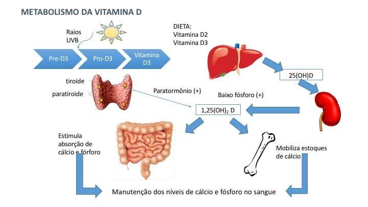 Ação do PTH no metabolismo da vitamina D. O PTH estimula a conversão da 25(OH)D na sua forma ativa - a 1,25(OH)D