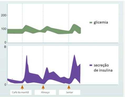 Metabolismo normal da insulina e glicose