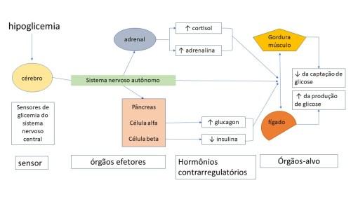 Mecanismos contrarreguladores da glicose na hipoglicemia