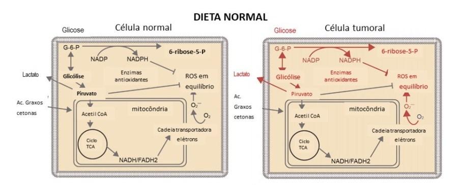 dieta_cetogenica_cancer