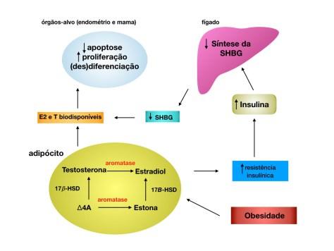 obesidade ca mama mecanismo - SHBG