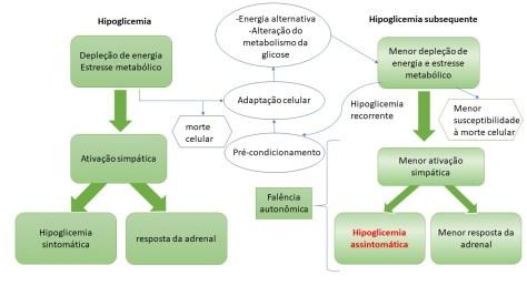 Falência autonômica na hipoglicemia sem sintomas no diabetes