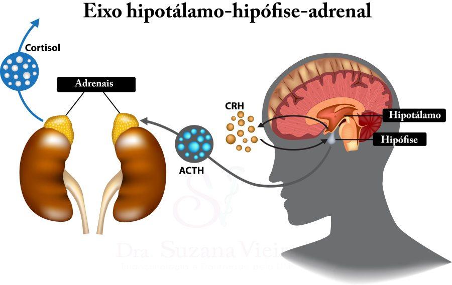 eixo hipotálamo-hipófise-adrenal