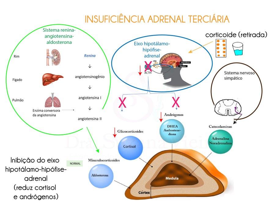 Regulação da produção dos hormônios adrenais.
