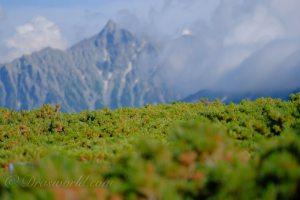 広大な景色だけが山じゃない。中望遠単焦点レンズで切り取る山の魅力的なオブジェ