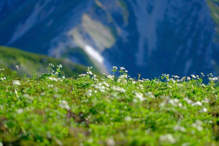 XF90mmで切り取る高山のお花畑