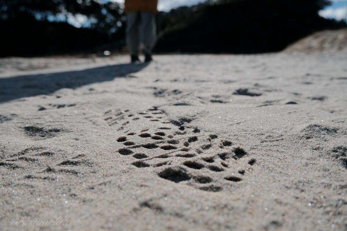 たまにはFUJIFILMのカメラで撮った海のスナップ写真を紹介します