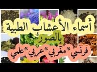 أسماء الأعشاب الطبية بالفرنسية، المغربية، العربية و العلمية مع صوها (الجزء الأول ) NOMS DES PLANTES