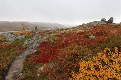 Hardangervidda im Herbst, Norwegen