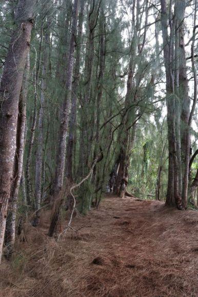 Olomana Trail (7)