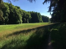 Am Waldrand hinter Groß Zecher