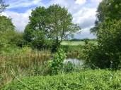 Bei Grabenitz am Kölpinsee
