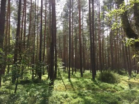Nur das Rauschen im Walde