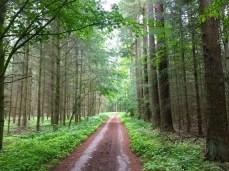 Radweg bei Göhren-Lebbin