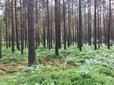 Fahrradtour durch den Wald im Müritz Nationalpark