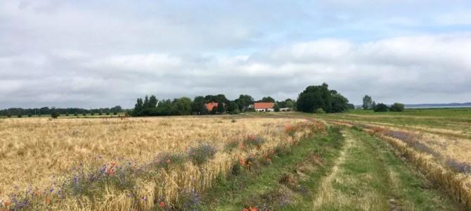 Wandern auf der Insel Usedom: Die Lieper-Winkel-Runde