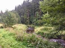 Almwiese (im Harz)