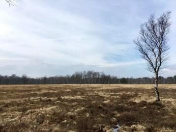 Landschaft im Duvenstedter Brook