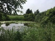 Landschaftliche Idylle bei Tönnhausen