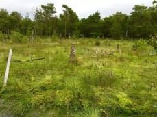 Sumpf und Totholz