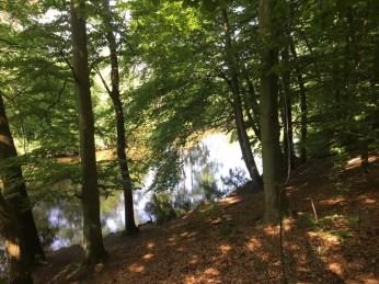 Teilweise recht steiles Ufer an der Ilmenau