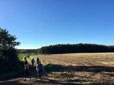 Auf dem Feldweg kurz vor dem Ziel in Amelinghausen