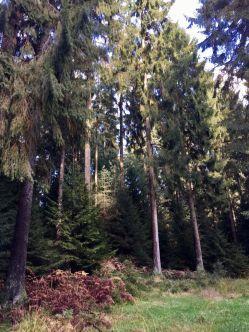 Dichter Wald im Staatsforst Rosengarten