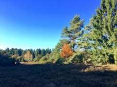 Die herbstliche Rehrhofer Heide