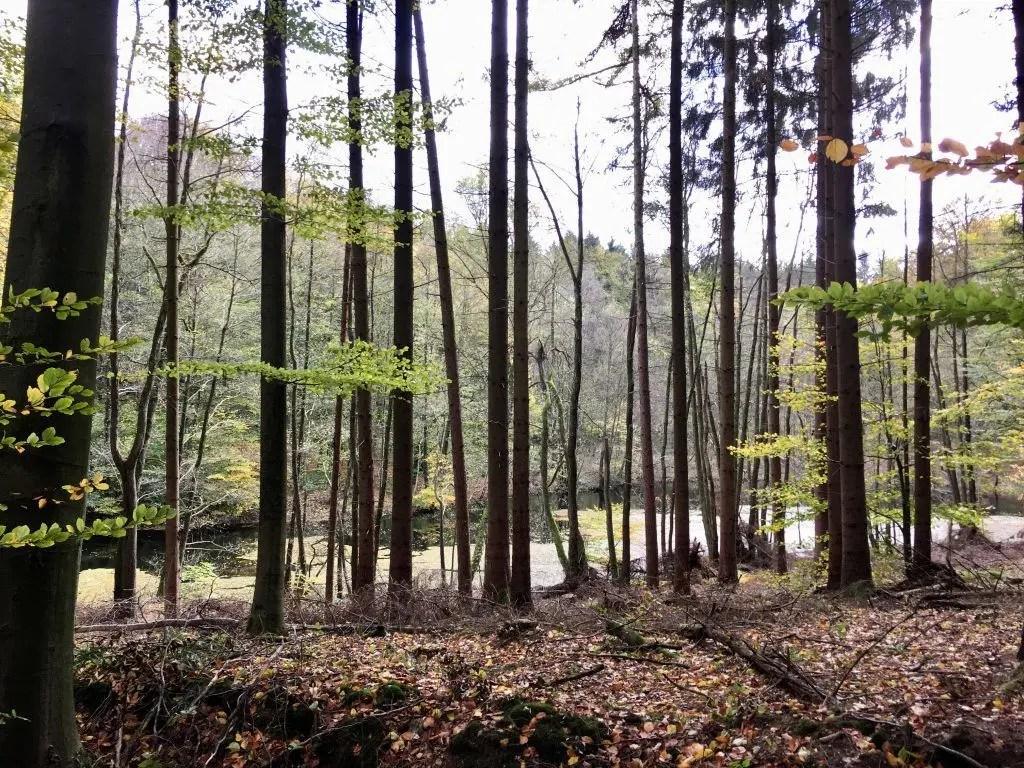 Herbstlicher Wald in der Hahnheide