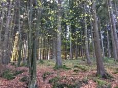 Im Wald am Hohenfelder Damm in der Hahnheide