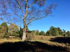 In der Rehrhofer Heide (2)